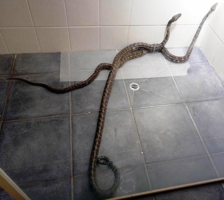 nők zuhanyzóban videók nagy faszt shemale baszik lány